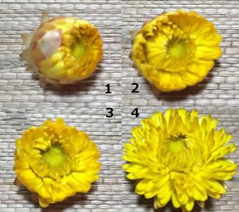 湿度によって開閉する花びら